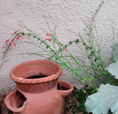 old terra cotta strawberry pot