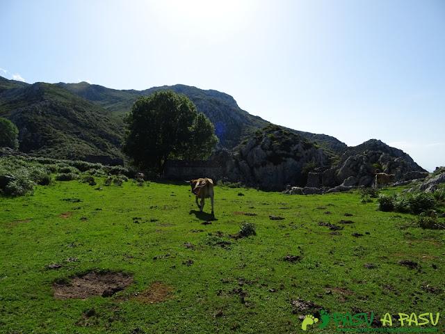 Vaca y cabañas en los Invernales de Portudera