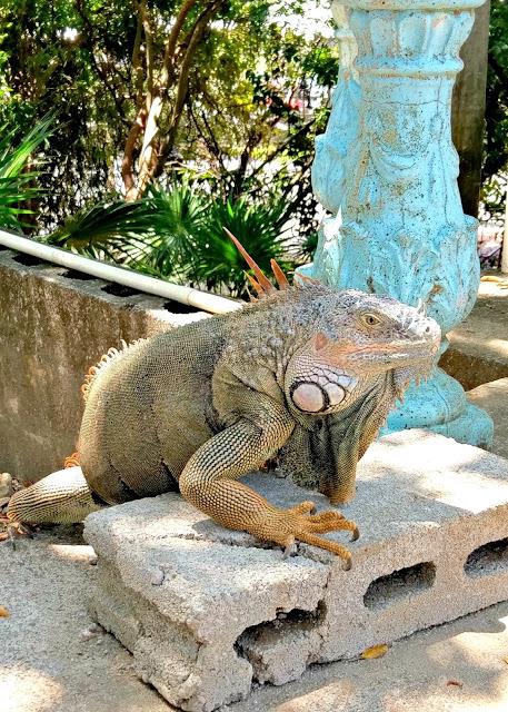 Arch's Iguana and Marine Park, Roatan, Honduras