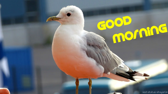 Good morning bird image