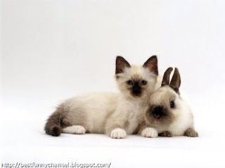 Bunny and kitty.