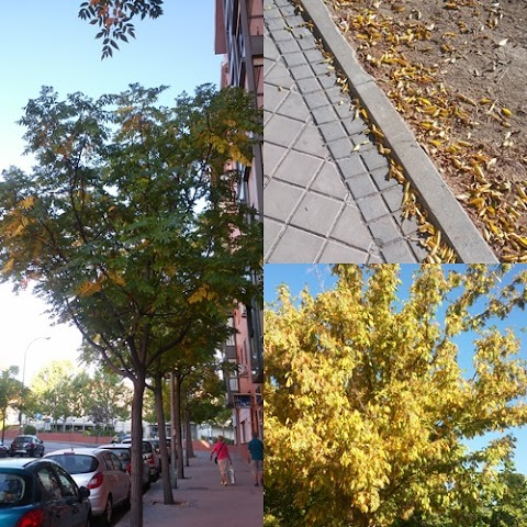 Toledo Trip Part 6 – Plaza Zocodover