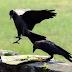 पशु-पक्षियों का पितरों से क्या है संबंध? जानें श्राद्ध में इनका महत्व