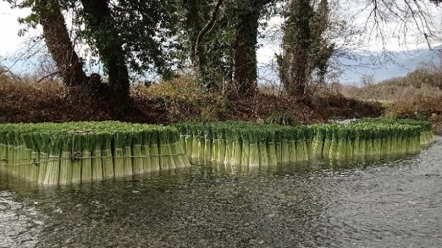 Δωροθέα Πέλλας: Ο ποταμός των πράσων