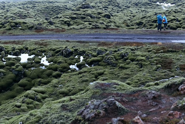 Lost to the Moon in the moss lava field of Iceland