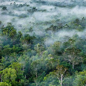 Keistimewaan Hutan Papua yang Menjadi Rumah Bagi Keanekaragaman Hayati Terbesar di Muka Bumi