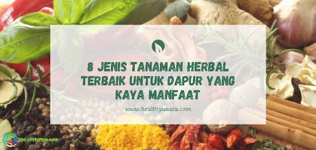 8 Jenis Tanaman Herbal Terbaik Untuk Dapur Yang Kaya Manfaat