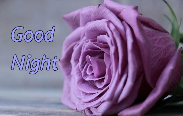 good-night-purple-flower-images-hd