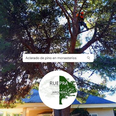 Aclarado de pino en urbanización Monasterios (Puzol) - Ruepra jardinería