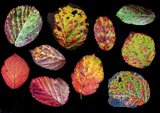 Leaves in all colors by Phil Barnett.