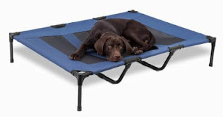 Raised Dog Beds