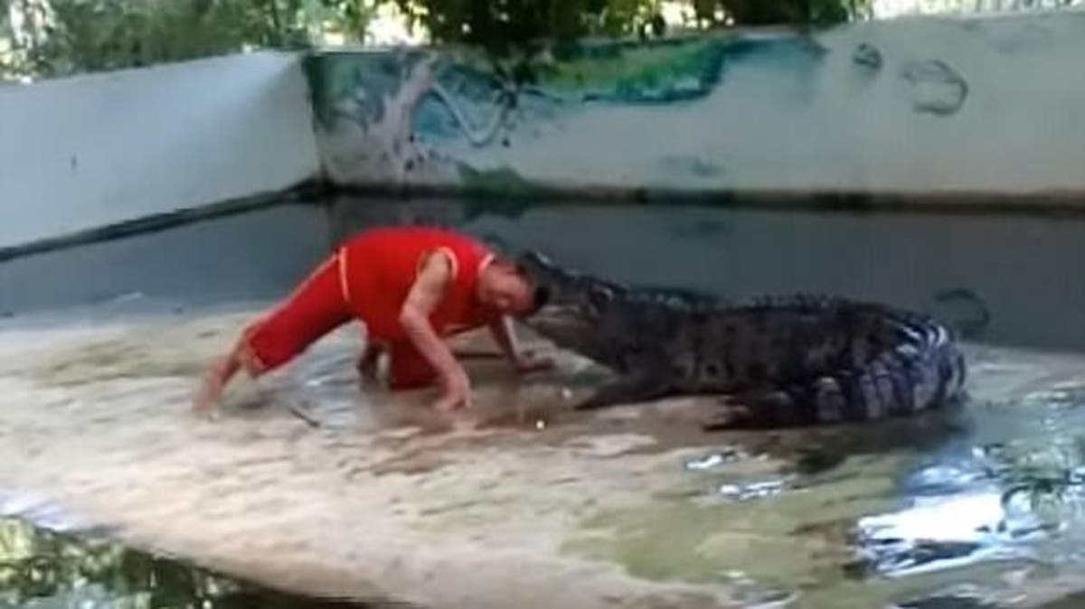 خالف الحجر الصحى فالتهمه التمساح