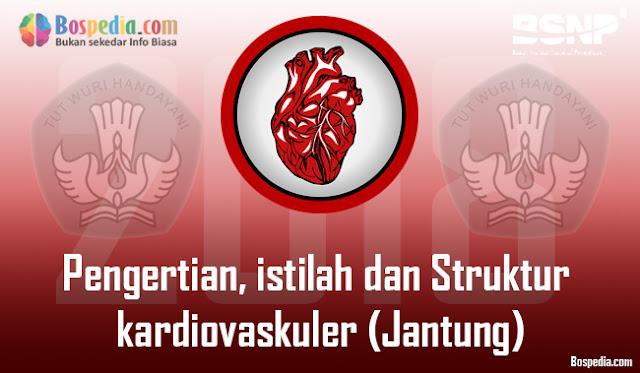 Pengertian, istilah dan Struktur kardiovaskuler (Anatomi jantung dan pembuluh darah)