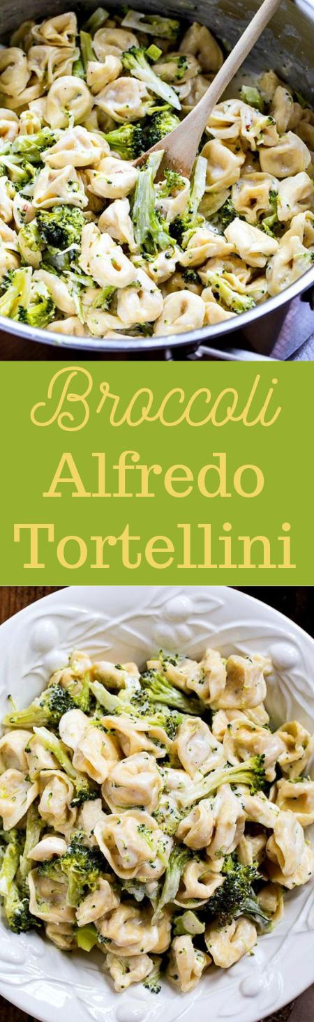 Broccoli Alfredo Tortellini #broccoli #vegetarian