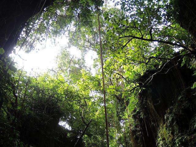 Sacred Monkey Forest Sanctuary, taman monyet, Mandala Wisata Wanara Wana