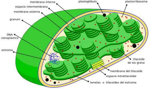Apa saja bagian bagian sel tumbuhan dan hewan?