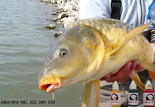 Essen Ikan Mas Subang Galatama
