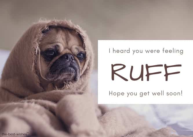 very funny get well soon dog messages