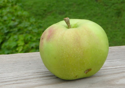 Spring green apple with slight small blush