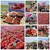 1,5 ton strawberry untuk anak gaza, hadiah dari rakyat indonesia