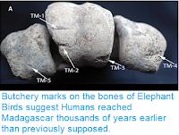 https://sciencythoughts.blogspot.com/2018/09/butchery-marks-on-bones-of-elephant.html