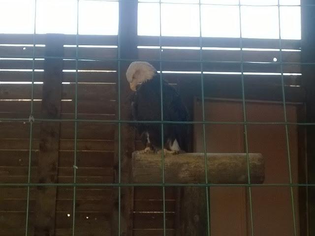 Aquila Zoo Pombia