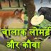 चालाक लोमड़ी और कौवा - Chalak Lomdi aur Kauwa | Hindi Moral Story for Kids