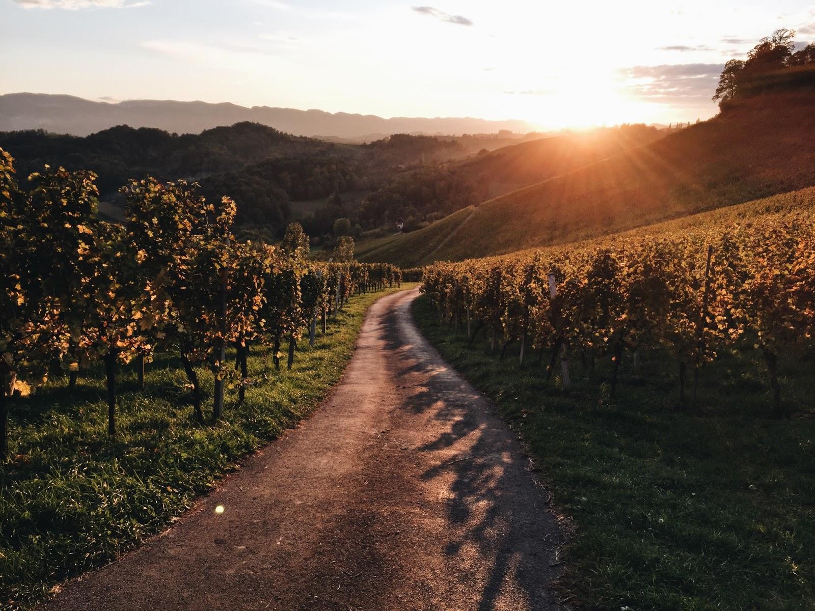 Südsteirische Weinstraße