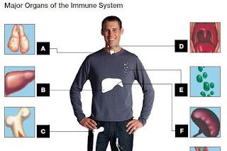 eating healthy provide better immunity