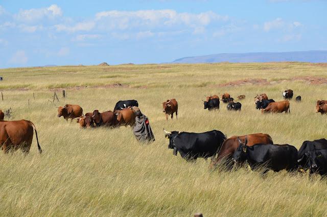 南アフリカ東ケープ州 © Tessa Mildenhall