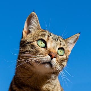 cat-sneezing