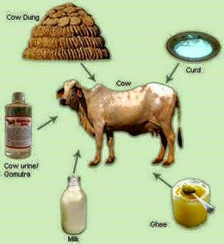 Benefit of Cow