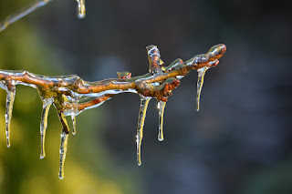 Close-up of ice melting off a branch. Photo by Damo T. on Unsplash.