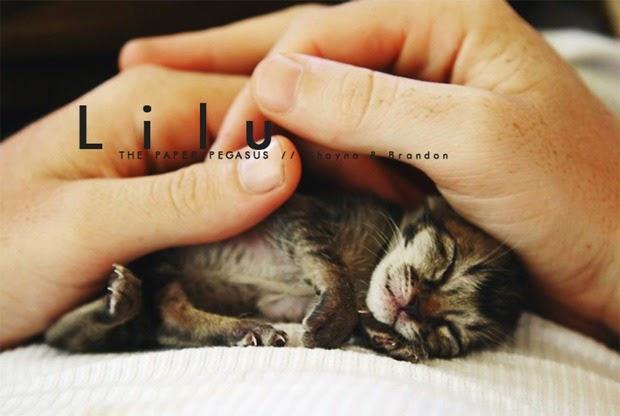 Lilu, Anak Kucing Kecil Yang Tiada Harapan Untuk Hidup Lama Seperti Kucing Lain