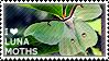 2012-07-19_I%2Blove%2BLuna%2BMoths_99x56