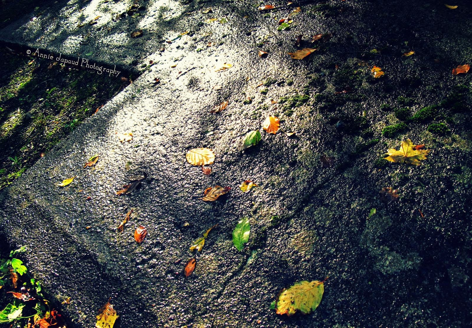ground, leaves, shadows