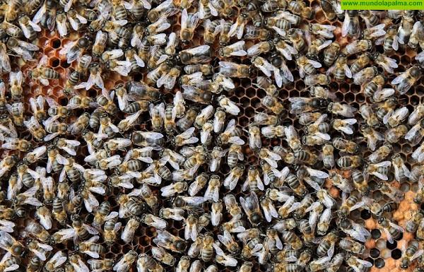 El Gobierno canario convoca ayudas para mejorar la producción y comercialización de los productos apícolas