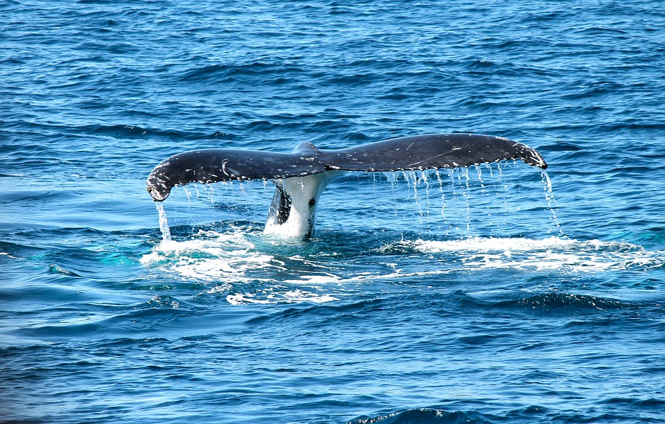 whale watching hobby
