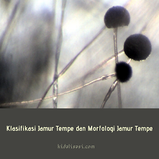 Klasifikasi Jamur Tempe dan Morfologi Jamur Tempe