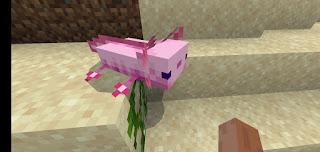 axolotl saifullah.id