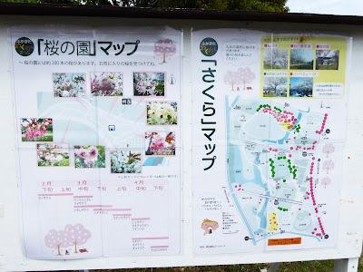 深北緑地花ごよみ 桜の園マップ&さくらマップ
