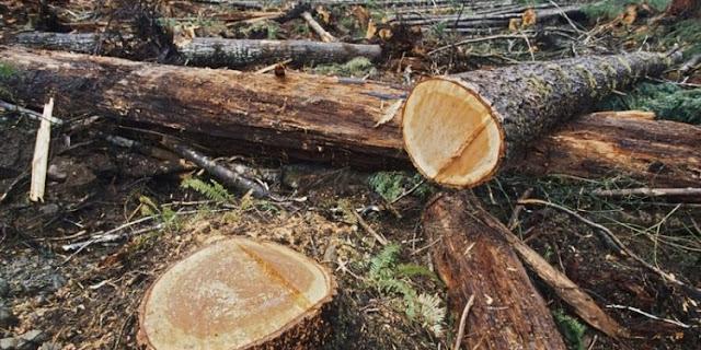 Talan árboles del Parque Henri Pittier por ausencia de gas doméstico