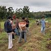 Targetkan 500 Hektar Lahan Untuk Ditanami Porang di Sumenep