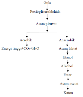 Fermentasi adalah proses terjadinya penguraian senyawa Pengertian, Jenis dan Reaksi Kimia Fermentasi