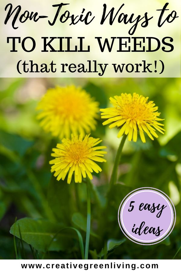 Five different DIY weed killer ideas. Includes the recipe for the best DIY weed killer spray, how to kill weeds with heat, how to kill weeds in driveways and sidewalks and more! These ideas really work even in your lawn, rocks and barked areas. #safeweedkiller #nontoxicweedkiller