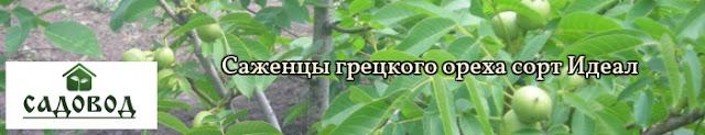 Саженцы грецкого ореха Идеал 0961595554, 0500548724 Украина Садовод