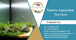 Aqua Nature Scape - Nature Aquarium Services