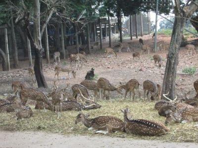 Deer Park Tirupati