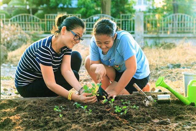 Cara menggemburkan tanah