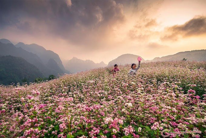 Hà Giang CHÍNH THỨC diễn ra lễ hội hoa tam giác mạch 2019 hoành tráng nhất trong lịch sử